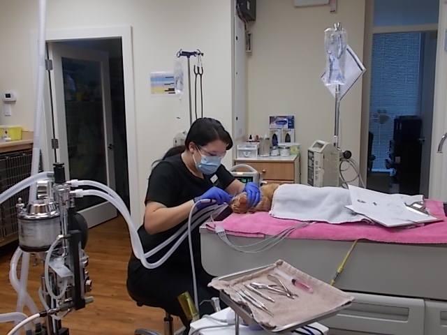 Monitoring/Anesthesia